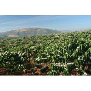 Дикорастущий кофе :Эфиопия Мокко Иргачиф