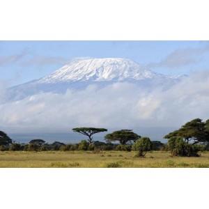 Кофе в зернах: Кения АА