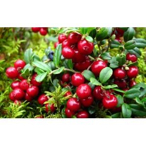 Чай фруктовый Брусничный крем, 0,5 кг
