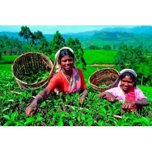 Чай черный Цейлон PEKOE, 0,5 кг