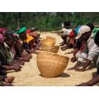 Кофе Эфиопия Лиму натуральный, 0,5 кг