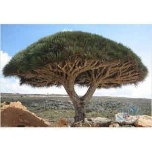 Йемен Мокко Санани, 0,5 кг