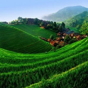 Чай зеленый китайский Юннань, 0,5 кг