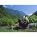 Китай Юннань АА, 0,5 кг