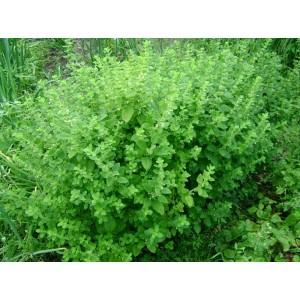 Мелисса трава 7мм, 0,5 кг
