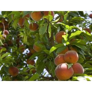 Персиковый рай зеленый, 0,5 кг