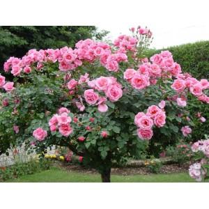 Роза Лепестки, 0,5 кг
